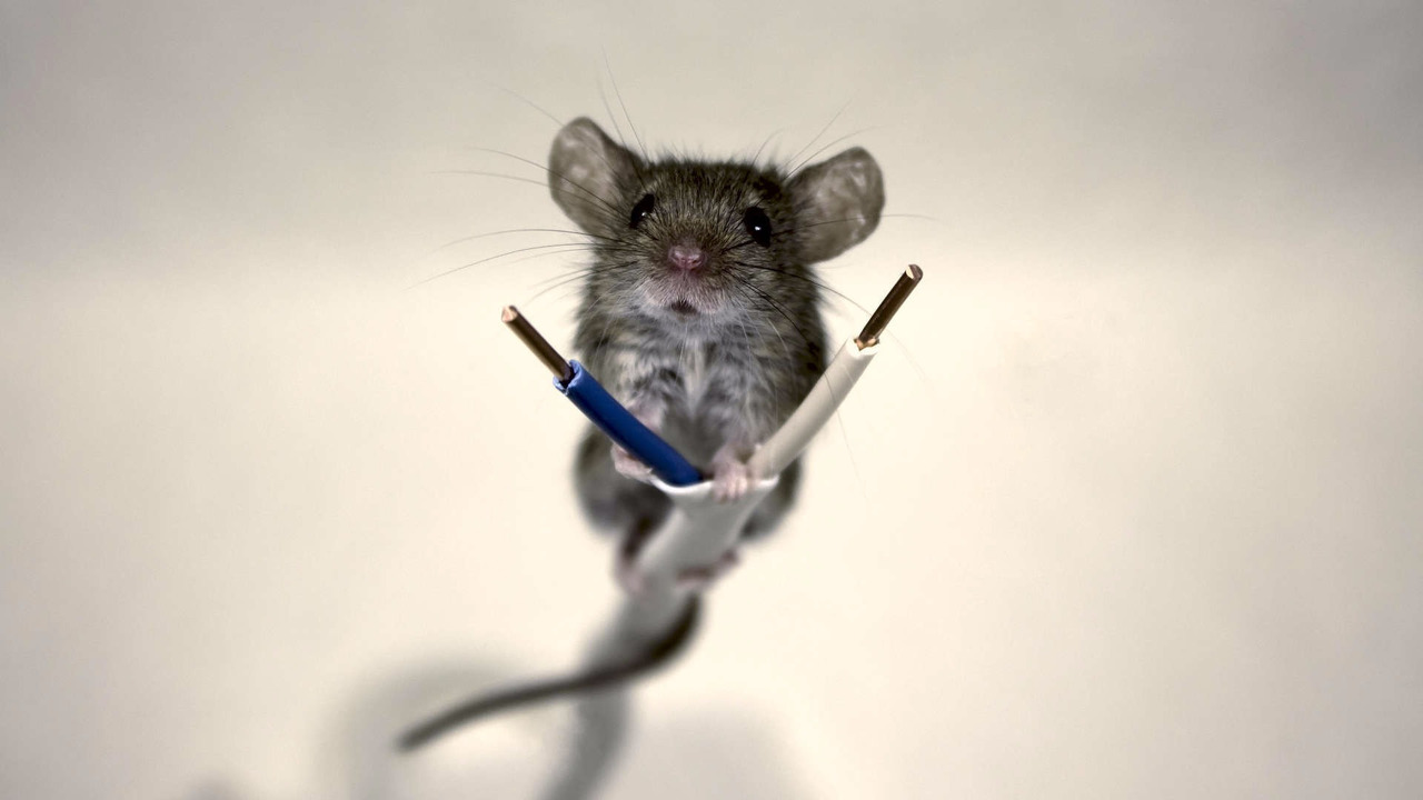 Mouse on a wire