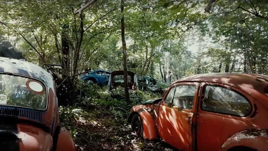VIDEO - La découverte étonnante d'un cimetière de VW Coccinelle