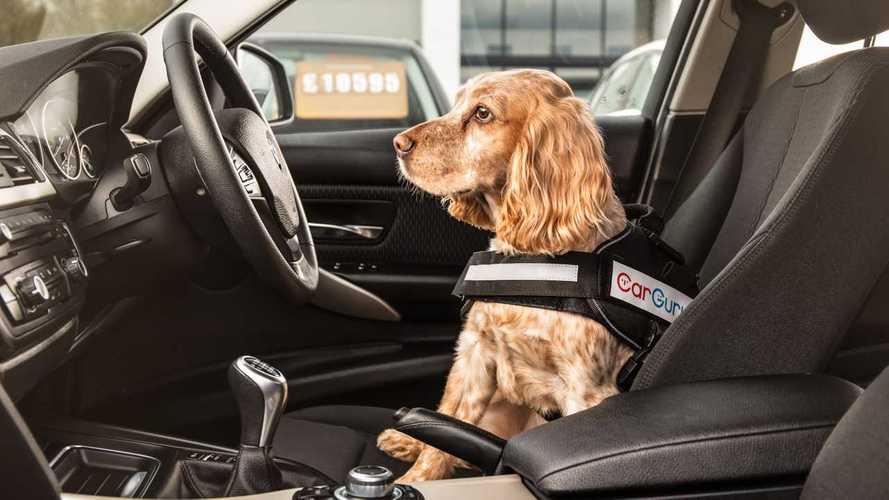 Árokba küldte gazdája furgonját egy kanadai kutya