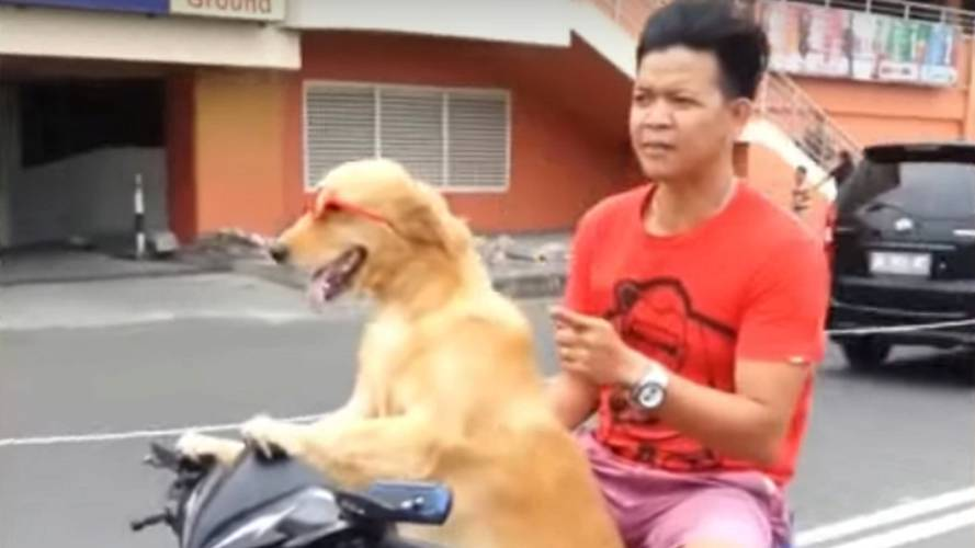 Dog Drives Scooter, the People Cheer — Video Of the Day