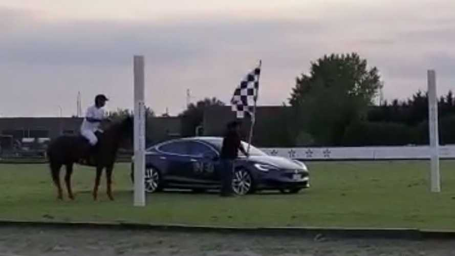 Watch Tesla Model S Versus A Horse In World's Most Unusual Race