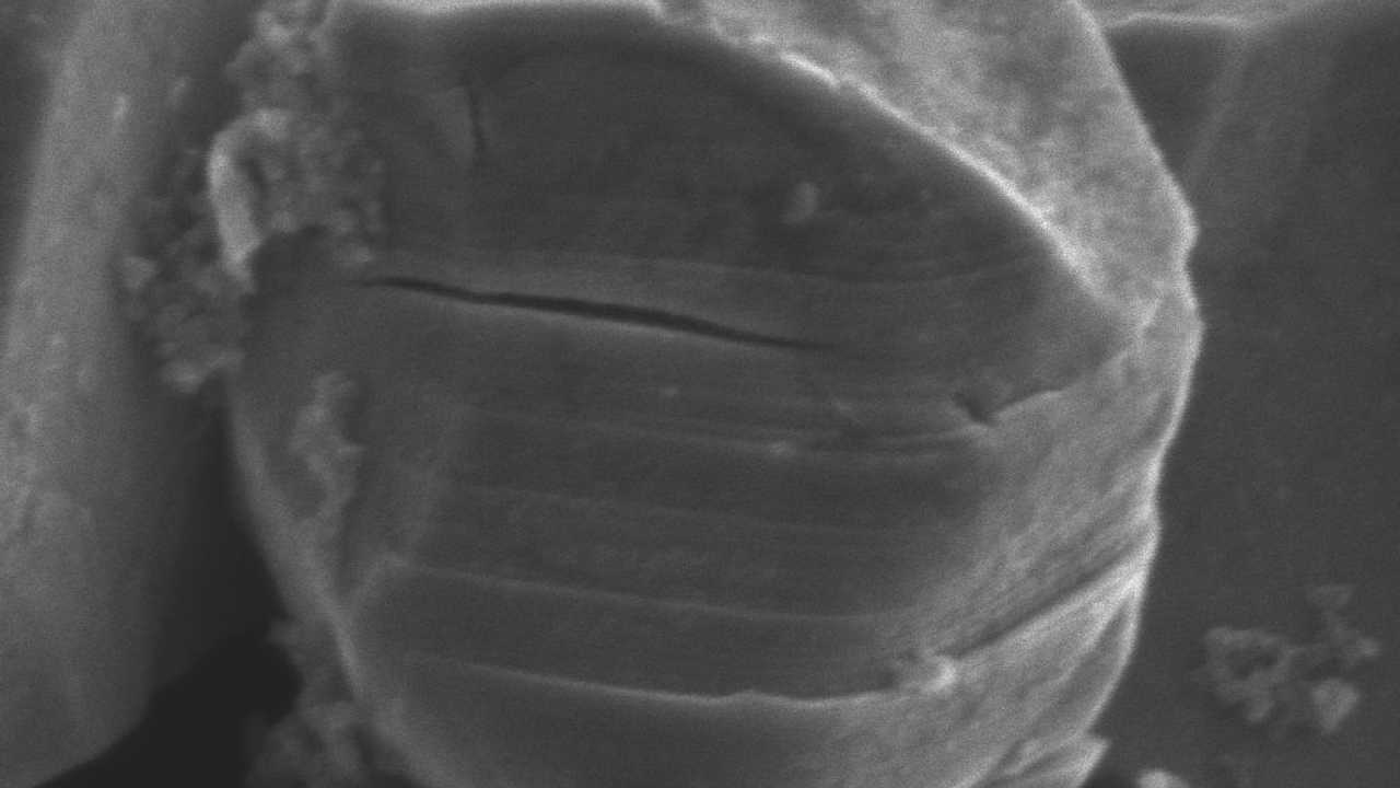 Check A Single-Crystal Nickel-Rich Cathode In Action