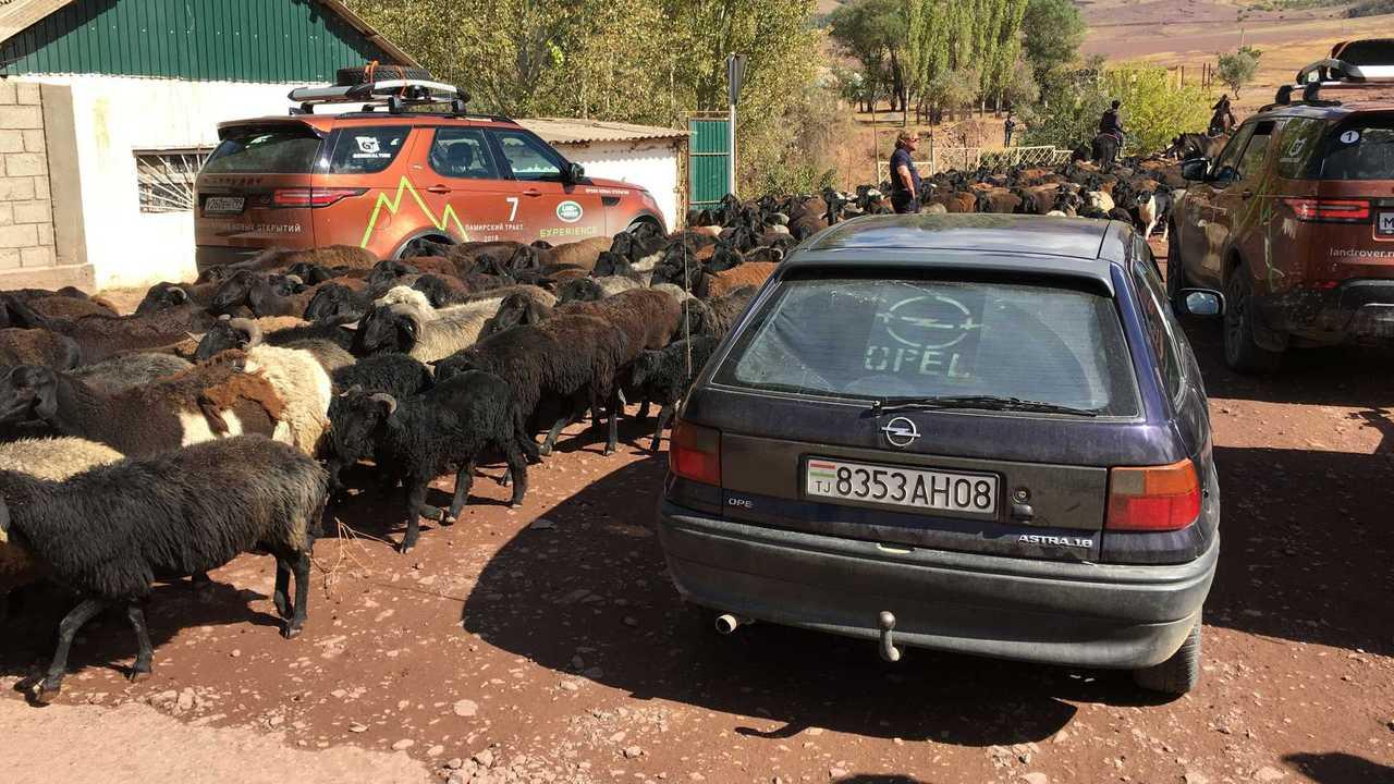 Автомобиль и животные