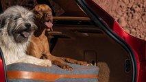 Aston Martin DBX: Zubehör für Hundefreunde