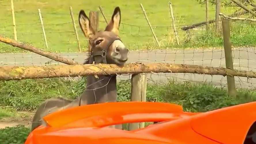 Burro confunde McLaren com cenoura e causa prejuízo de US$ 6.800