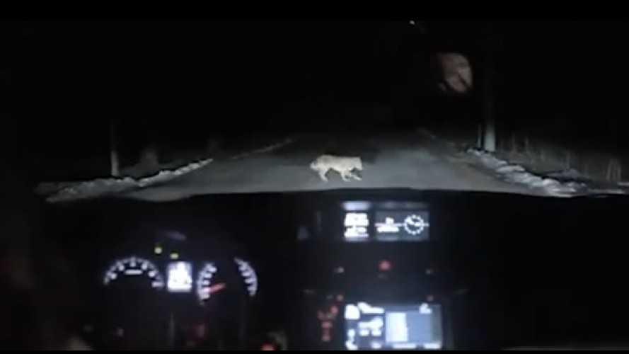 Vídeo: mulher atropela cachorro em comercial da Subaru