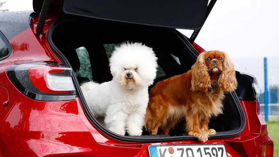 Ford - International Dog Day