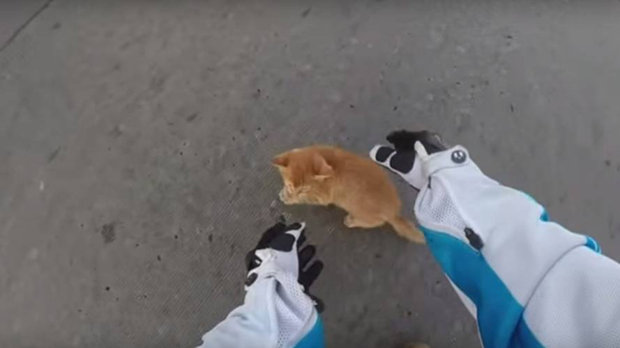Motorcyclist Saves Kitten - Internet Almost Implodes