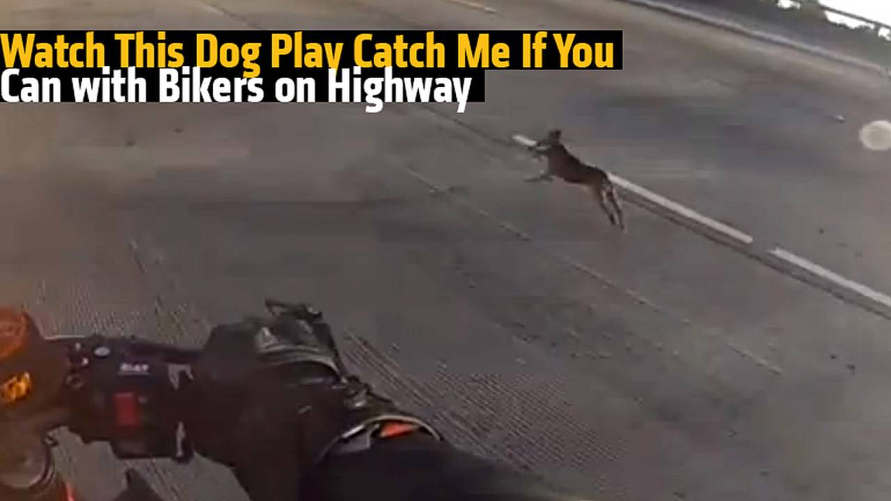 Video (NSFW Language): Dog Plays Catch Me If You Can with Bikers on Highway
