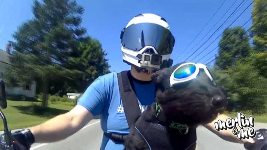 Take A Ride With Merlin The Moto Dog