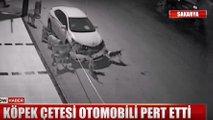 Köpek çetesi Toyota Corolla'yı mahvetti