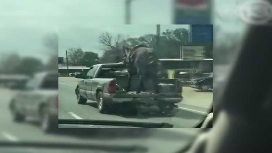 Driver Caught Carrying Horse In Open Pickup Bed At 70 MPH