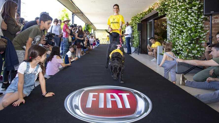 Fiat Professional, impulsor de la adopción de perros