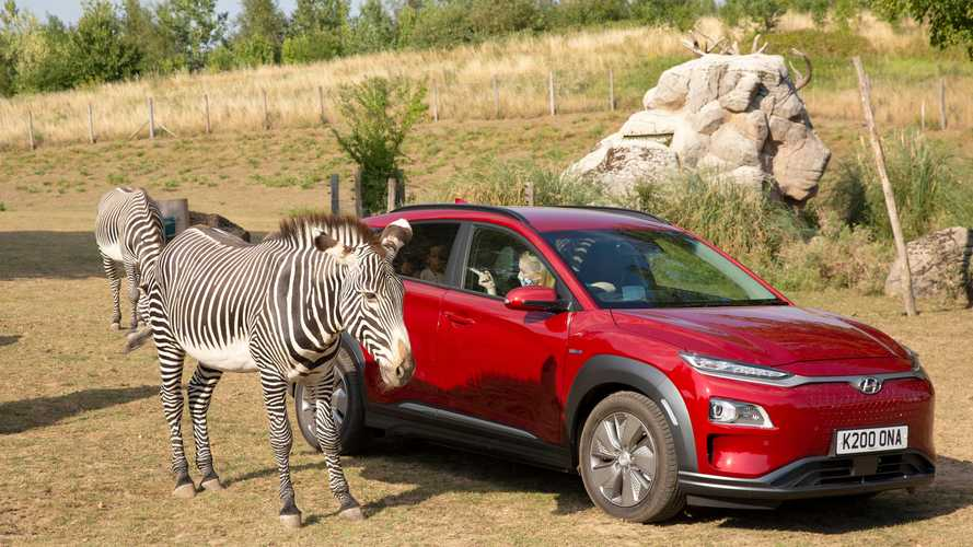 UK safari re-opens using electric vehicles