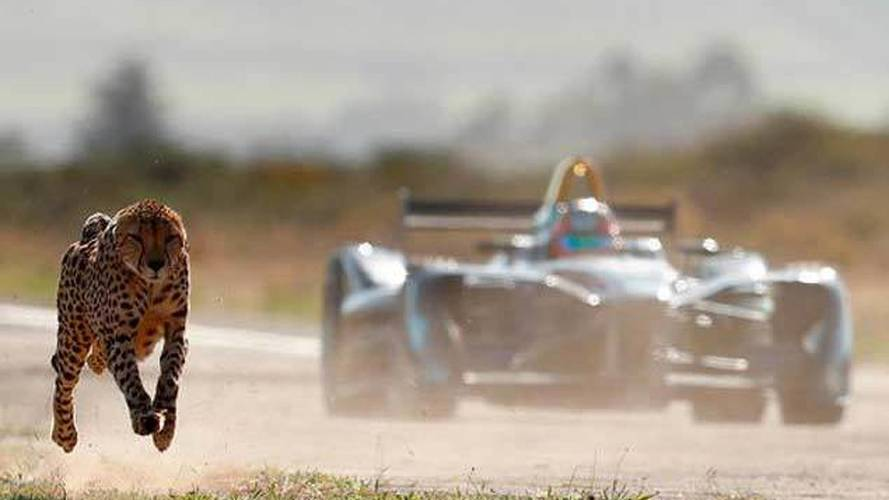 Hangisi daha hızlı: elektrikli bir yarış aracı mı yoksa bir çita mı?