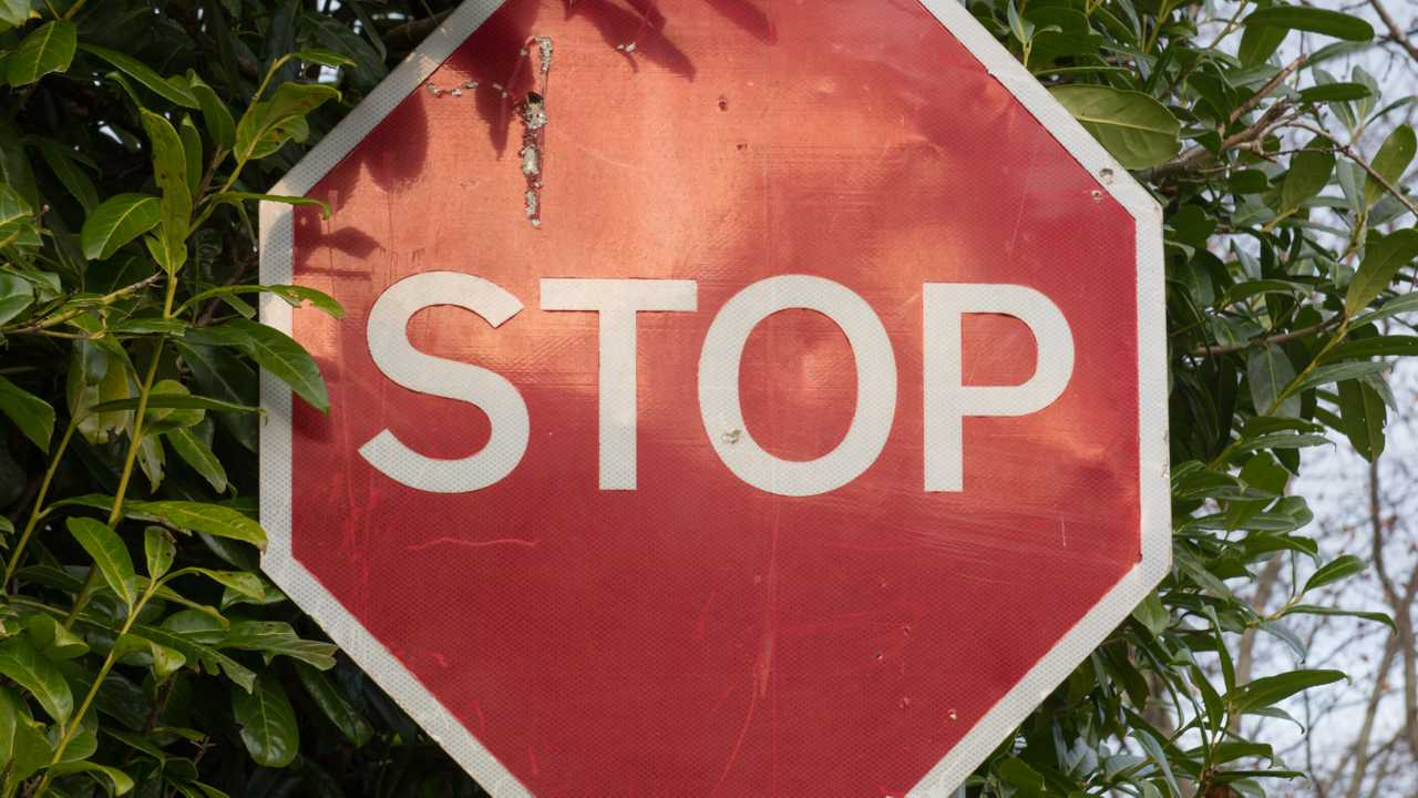 Stop sign in Devon England surrounded by foliage