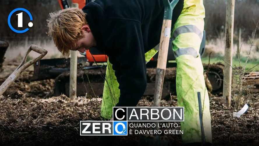 Piantare alberi per bilanciare la CO2 prodotta