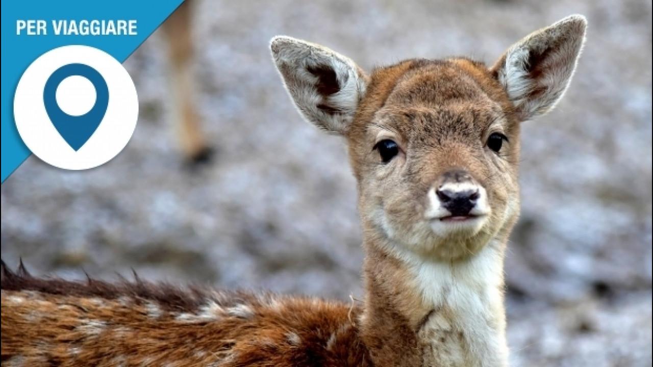 [Copertina] - Animale investito con l'auto, cosa fare e chi contattare