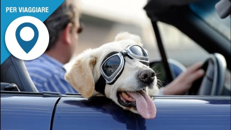 In auto col cane all'estero, quali regole rispettare