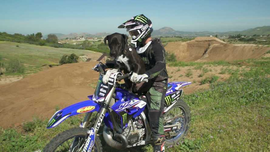 Cosa NON fare con un cane e una moto da cross [VIDEO]