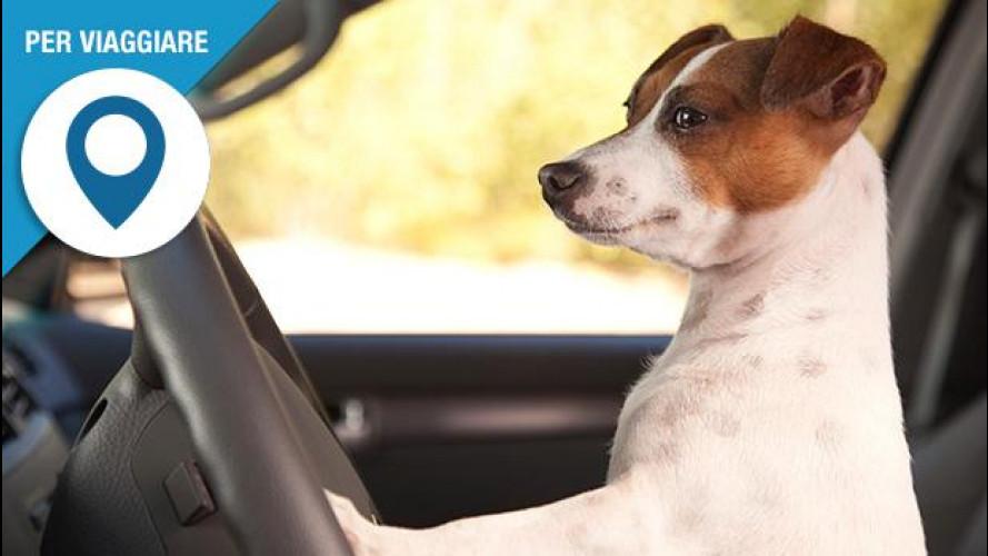 In auto con il cane, come viaggiare in modo sicuro e comodo