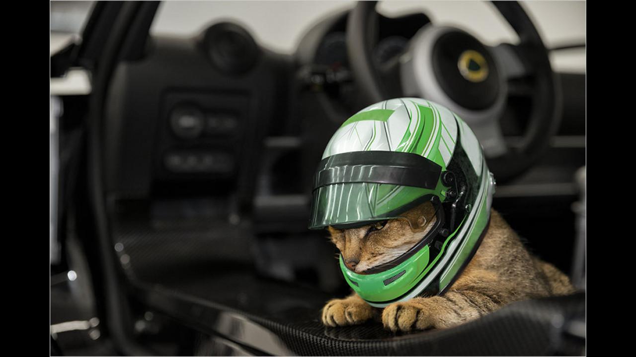Lotus: Unfallschutz für Katzen