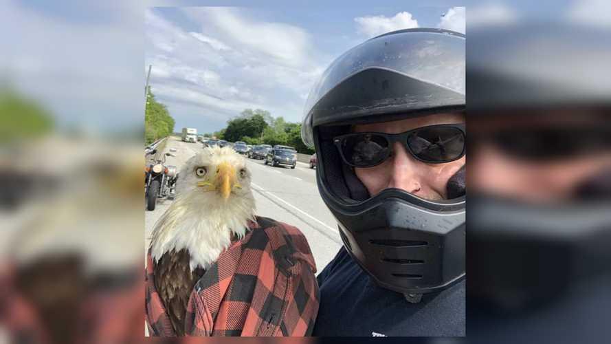 Hero Motorcyclist Saves Injured Freedom Bird