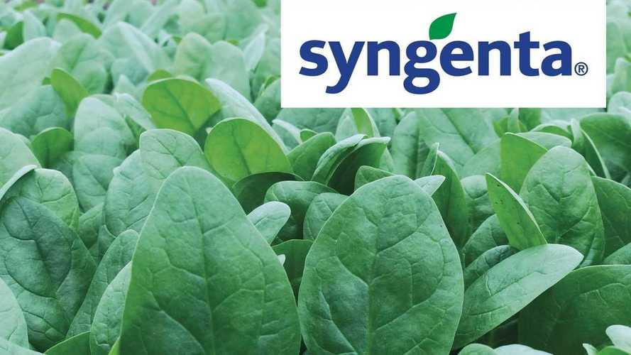 Syngenta El Giga; versatilità nello spinacio invernale