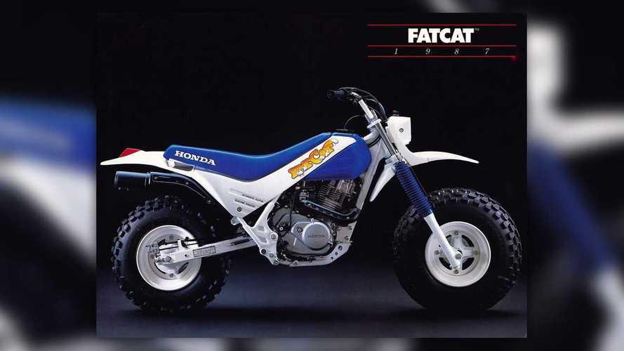 Cycelweird: Honda TR200 Fat Cat