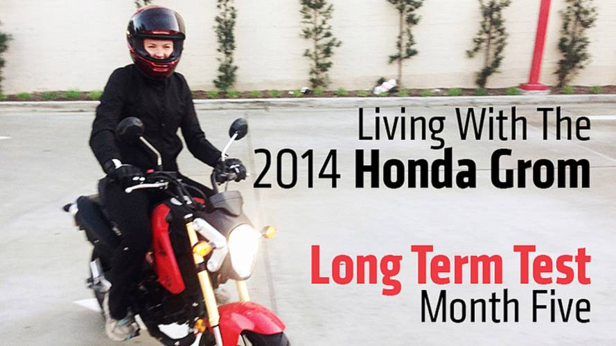 Long-Term Test Month Five: Living With The 2014 Honda Grom