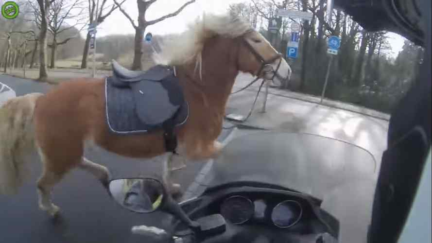 Watch This Scooter Rider Help Catch a Runaway Horse