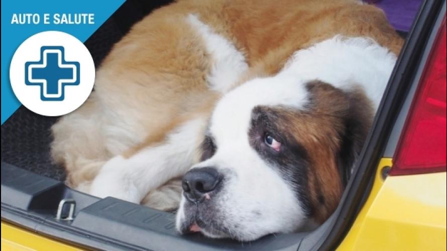 Animali in auto, come togliere i peli che lasciano
