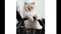 Opel: Corsa, Karl und Katze