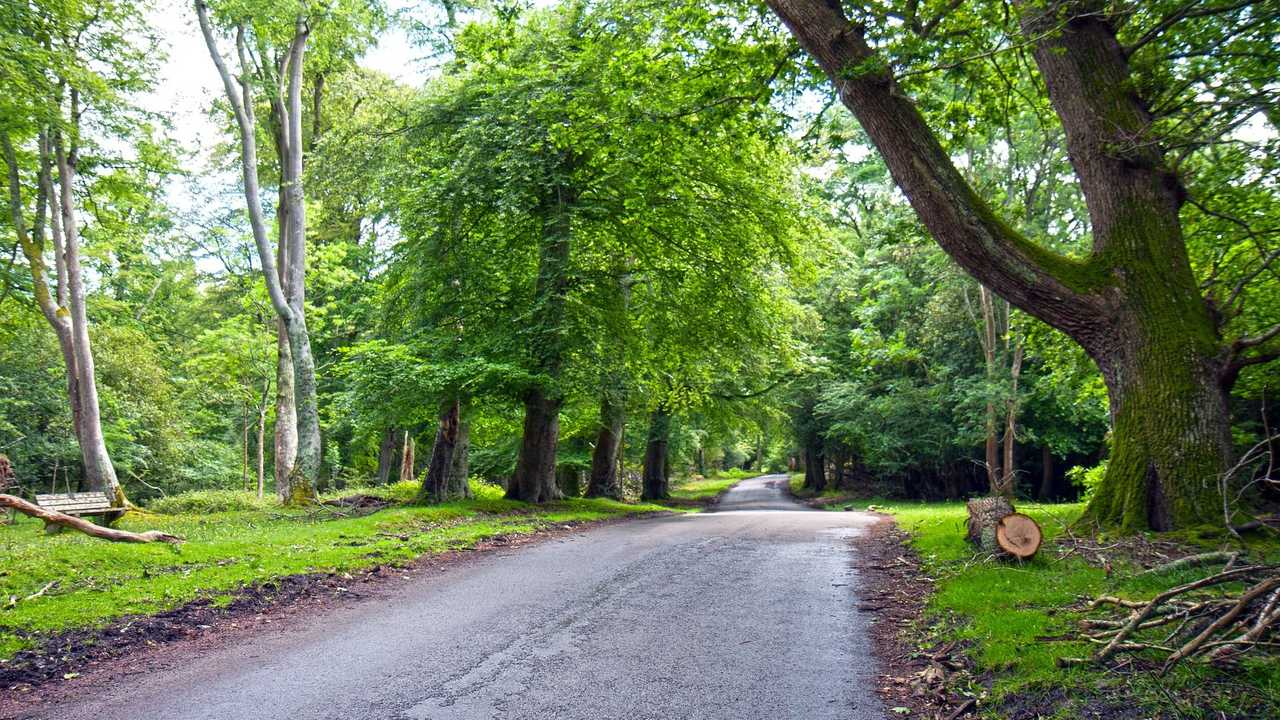 Wooded Roads Are Cool!