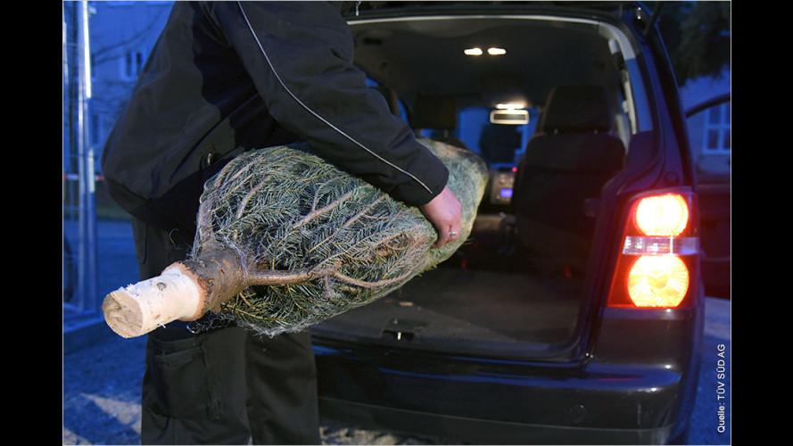 Weihnachtsbaum-Transport im Auto: Last-Minute-Bäume? Achtung!