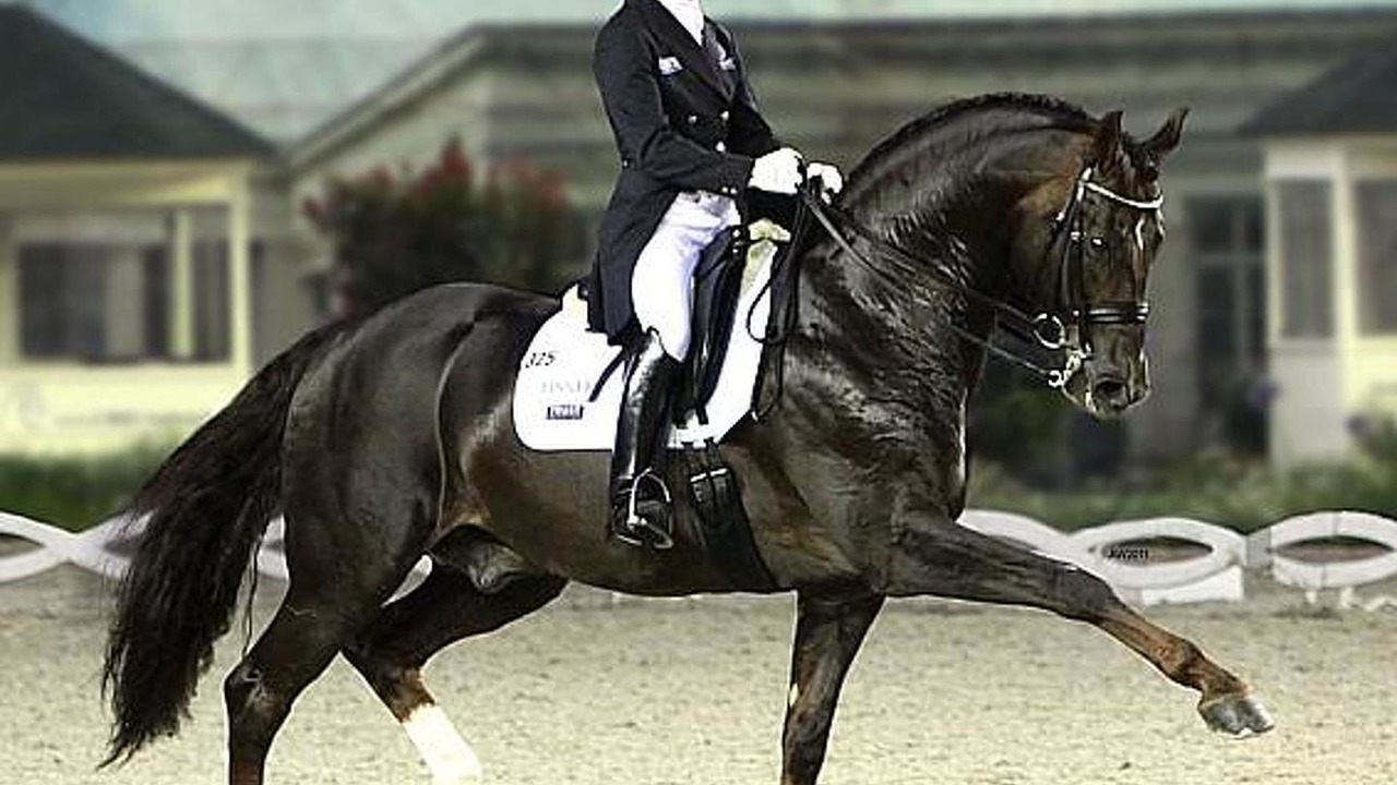 Helen Langehanenberg and Stallion Damon Hill in equestrian dressage event
