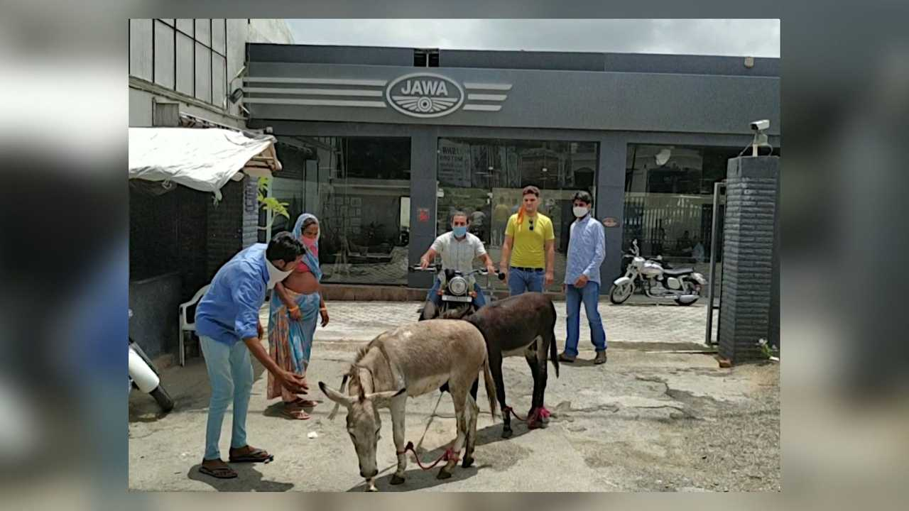 Jawa Donkey Parade