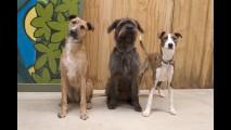 Conheça Porter, o primeiro cão motorista do mundo