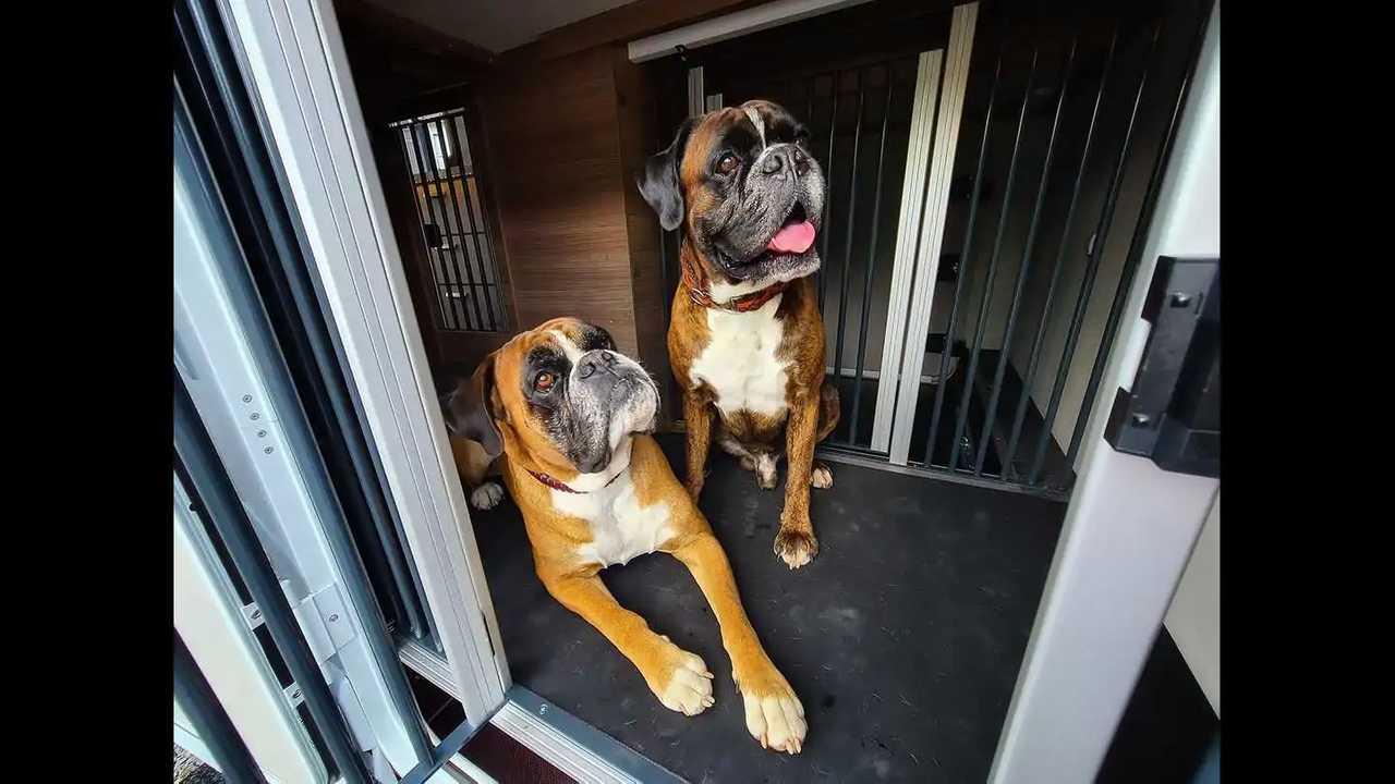 Den Hunde-Umbau von Lucky Dog Camper gibt es für den Knaus Live I