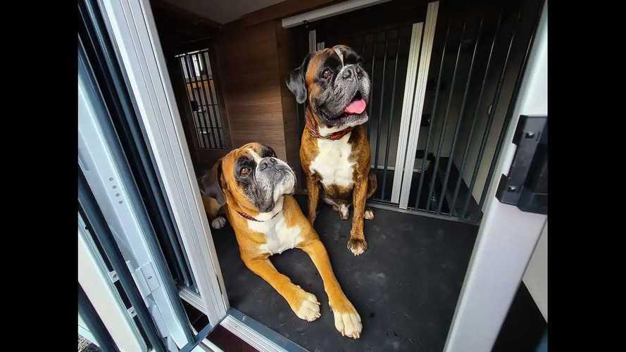 Lucky Dog Camper: Das Wohnmobil als Hunde-Hotel