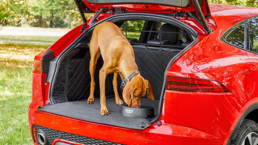 Jaguar Pet Accessory Packs