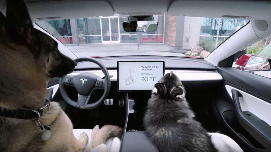 Tesla, arrivano intrattenimento per cani e modalità sentinella