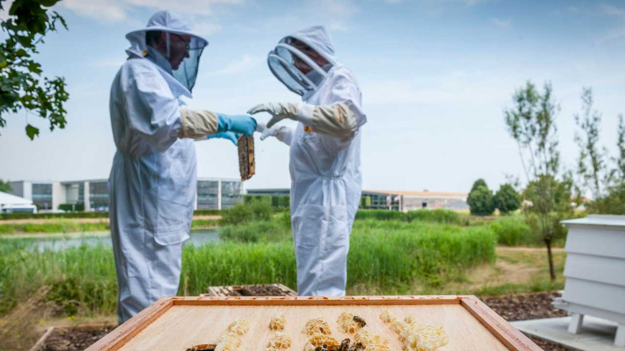 Rolls-Royce honey production