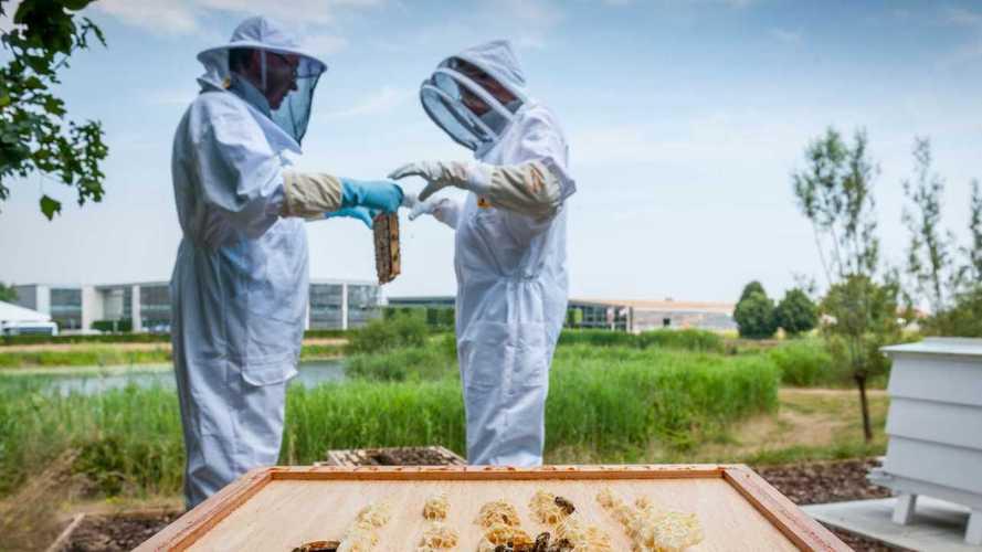 Rolls-Royce asks staff to 'volunteer' as part-time beekeepers