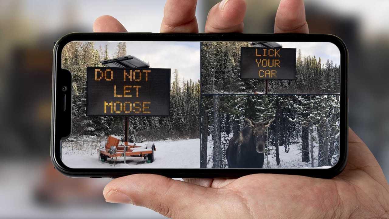 Canada Moose Problem Lead