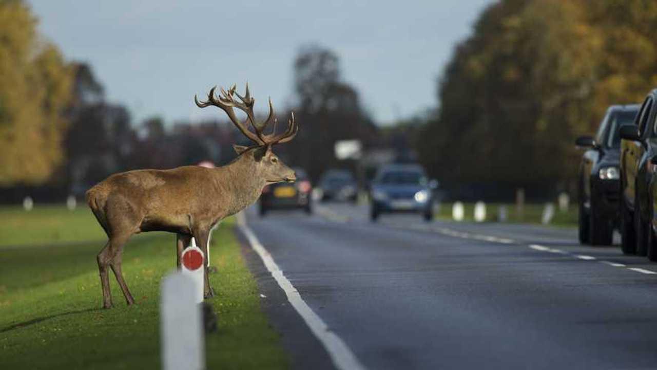 GEM Deer at side of road