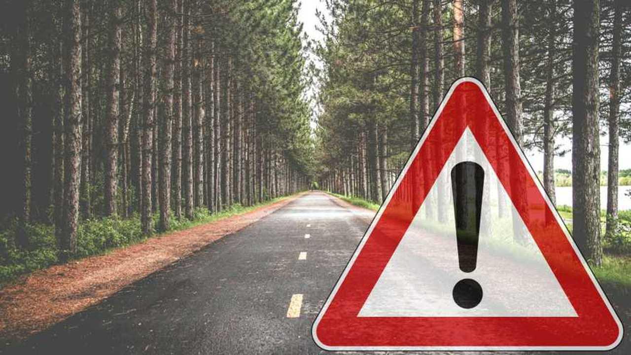 Albero pericoloso? Omicidio stradale per il proprietario della strada