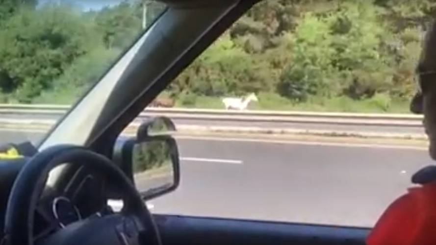 Traffic officers called in to corral ponies on the motorway