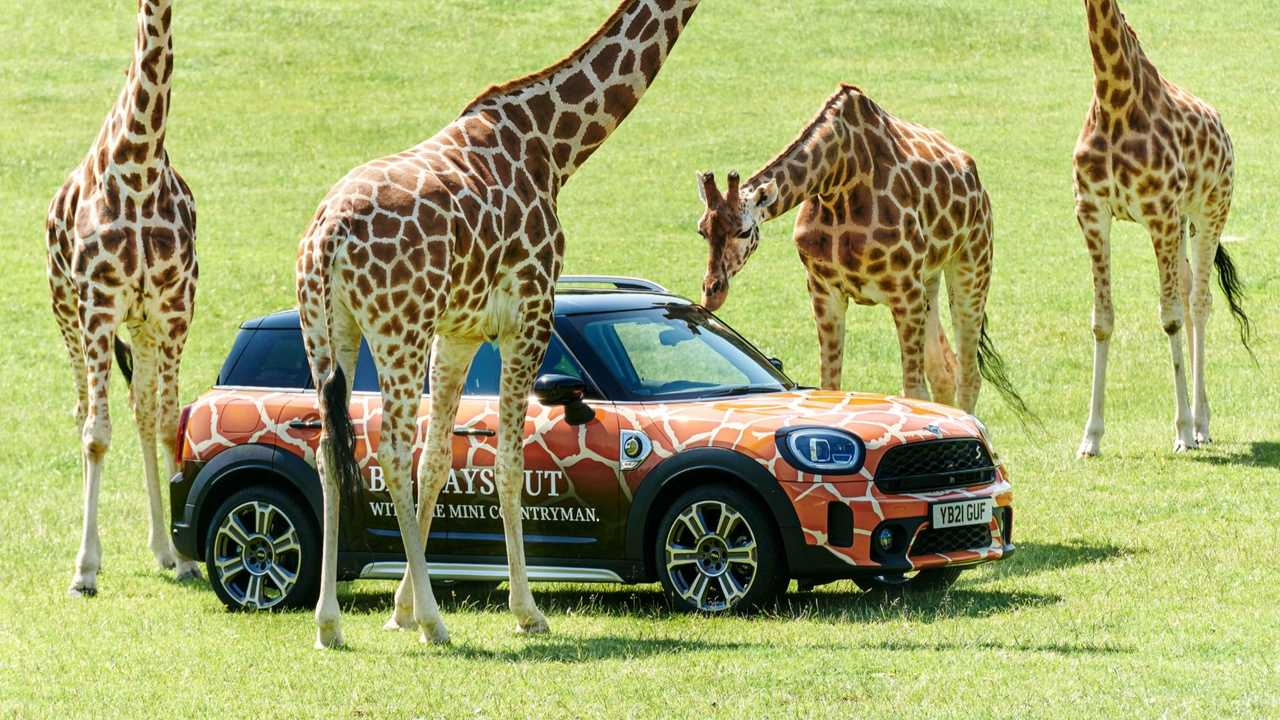 Mini Countryman PHEV Longleat Safari Park