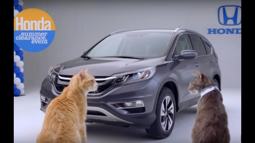 """Honda CR-V atrai felinos em curioso vídeo homenageando o """"dia do gato"""""""